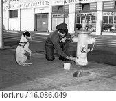 Купить «Los Angeles, California: 1952.A begging dog hopes for a speedy finish to the paint job on the fire hydrant.», фото № 16086049, снято 10 декабря 2019 г. (c) age Fotostock / Фотобанк Лори