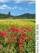 Купить «Japan, Sanyo Region, Okayama Prefecture, Soja, View of Bicchu Provincial Monastery, Five Storied Pagoda and cluster amaryllis.», фото № 16166965, снято 19 марта 2019 г. (c) age Fotostock / Фотобанк Лори