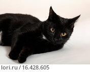 Купить «Черный кот», эксклюзивное фото № 16428605, снято 17 декабря 2015 г. (c) Яна Королёва / Фотобанк Лори