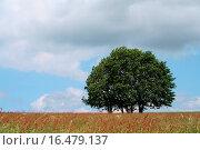 dreisam. Стоковое фото, фотограф Marcel Schauer / easy Fotostock / Фотобанк Лори