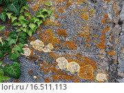Купить «stone ivy braid lichens plait», фото № 16511113, снято 19 октября 2018 г. (c) PantherMedia / Фотобанк Лори