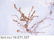 Купить «Цветочный фон», фото № 16571337, снято 27 июня 2019 г. (c) Музыка Анна / Фотобанк Лори