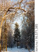 Купить «Зимний лес», фото № 16571385, снято 27 июня 2019 г. (c) Музыка Анна / Фотобанк Лори