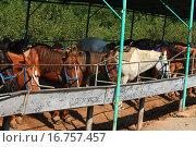 Лошади стоят в загоне. Стоковое фото, фотограф Надежда Шапкина / Фотобанк Лори
