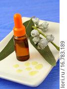 Купить «Tasmanian blue gum oil Eucalyptus globulus», фото № 16783189, снято 29 августа 2006 г. (c) easy Fotostock / Фотобанк Лори