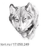 Купить «Sketch of tattoo art, wolf», фото № 17050249, снято 23 апреля 2019 г. (c) easy Fotostock / Фотобанк Лори