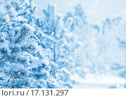Купить «В зимнем лесу», фото № 17131297, снято 13 ноября 2015 г. (c) Икан Леонид / Фотобанк Лори