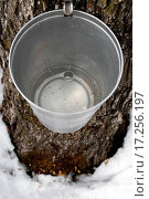 Купить «Bucket on a tree filled with maple sap», фото № 17256197, снято 19 сентября 2018 г. (c) easy Fotostock / Фотобанк Лори