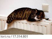 Cat relaxing on heater. Стоковое фото, фотограф Eric Fahrner / easy Fotostock / Фотобанк Лори