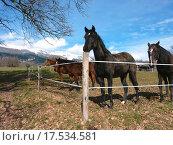 Купить «Horses behind a fence», фото № 17534581, снято 23 марта 2019 г. (c) easy Fotostock / Фотобанк Лори