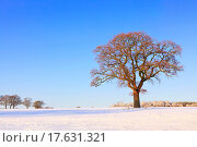 Купить «Landscape photo of a single oak tree in a snow covered field as the sun sets on a cold winter afternoon.», фото № 17631321, снято 20 января 2019 г. (c) easy Fotostock / Фотобанк Лори