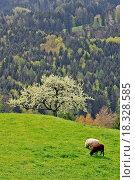 Купить «Sheeps», фото № 18328585, снято 19 февраля 2019 г. (c) easy Fotostock / Фотобанк Лори