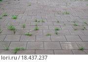 Зелёная трава, проросшая сквозь тротуарную плитку. Стоковое фото, фотограф Алексей Наумов / Фотобанк Лори