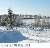 Зимний лес в солнечный день. Карелия. Стоковое фото, фотограф Сергей Серебряков / Фотобанк Лори