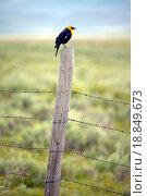 Купить «Yellow_winged black bird on fence rail, near Lakeview Montana in spring», фото № 18849673, снято 23 апреля 2019 г. (c) easy Fotostock / Фотобанк Лори