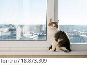 Купить «Young cat sitting on window sill», фото № 18873309, снято 24 января 2014 г. (c) Володина Ольга / Фотобанк Лори