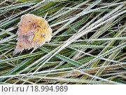 Листва и трава покрытые инеем. Стоковое фото, фотограф Татьяна Зарубо / Фотобанк Лори