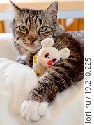 Cat resting with a teddy. Стоковое фото, фотограф JIL Photo / easy Fotostock / Фотобанк Лори