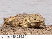 Krokodil Crocodilia. Стоковое фото, фотограф Stephan Rech / easy Fotostock / Фотобанк Лори