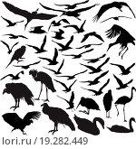 Купить «Set of vector birds», фото № 19282449, снято 21 марта 2019 г. (c) easy Fotostock / Фотобанк Лори
