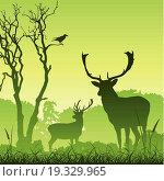 Купить «Male Stag Deer», фото № 19329965, снято 23 января 2018 г. (c) easy Fotostock / Фотобанк Лори