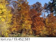Купить «autumn fall red light yellow», фото № 19452581, снято 20 мая 2019 г. (c) PantherMedia / Фотобанк Лори