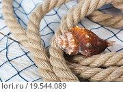 Ракушка лежит на канате. Стоковое фото, фотограф Игорь Кошляев / Фотобанк Лори