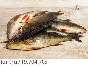 Купить «Свежая рыба», фото № 19704705, снято 10 января 2016 г. (c) Наталья Осипова / Фотобанк Лори