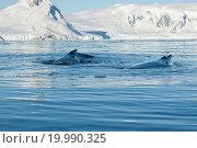 Купить «Two humpback whale», фото № 19990325, снято 18 сентября 2018 г. (c) easy Fotostock / Фотобанк Лори