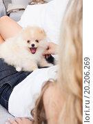 Купить «young woman playing with her tinny dog at home», фото № 20206269, снято 12 августа 2012 г. (c) easy Fotostock / Фотобанк Лори