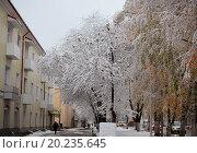 Первый снег в городе. Стоковое фото, фотограф Наталья Сладкова / Фотобанк Лори