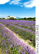 Купить «lavender field and Grignan village in France», фото № 20239433, снято 4 июля 2010 г. (c) easy Fotostock / Фотобанк Лори