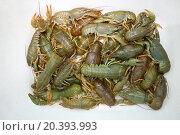 Купить «A handful of live crawfishes on a white plate», фото № 20393993, снято 13 сентября 2014 г. (c) Losevsky Pavel / Фотобанк Лори