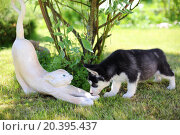 Купить «Little puppy sniffing cat garden sculpture on the green lawn», фото № 20395437, снято 5 июня 2014 г. (c) Losevsky Pavel / Фотобанк Лори