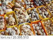 Купить «Showcases a variety of beautiful seashells for souvenirs», фото № 20395513, снято 24 июля 2014 г. (c) Losevsky Pavel / Фотобанк Лори