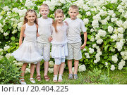 Купить «Two boys and two girls stand embraced against white blooming bushes in summer park», фото № 20404225, снято 2 июля 2013 г. (c) Losevsky Pavel / Фотобанк Лори