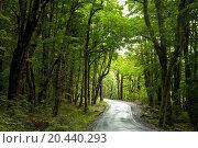 Купить «Dirt road through dense rainforest at New Zealand», фото № 20440293, снято 9 января 2010 г. (c) easy Fotostock / Фотобанк Лори
