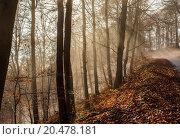 Купить «Nature Misty Forest Landscape», фото № 20478181, снято 22 июля 2019 г. (c) PantherMedia / Фотобанк Лори