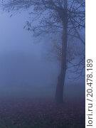Купить «Nature Misty Forest Landscape», фото № 20478189, снято 22 июля 2019 г. (c) PantherMedia / Фотобанк Лори