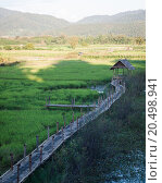 Купить «Green rice field in Chiang rai, Thailand», фото № 20498941, снято 27 мая 2019 г. (c) PantherMedia / Фотобанк Лори