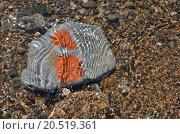 Водяные узоры, камень и галька в прозрачной воде. Стоковое фото, фотограф Александр Токмаков / Фотобанк Лори