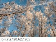Морозное утро. Стоковое фото, фотограф Фотин Андрей / Фотобанк Лори
