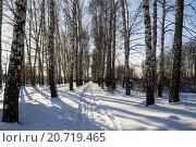Купить «Зимняя березовая роща в солнечный день», фото № 20719465, снято 11 января 2016 г. (c) MARINA EVDOKIMOVA / Фотобанк Лори