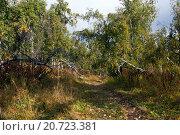 Лесная тропинка в горах Башкирии. Стоковое фото, фотограф Сергей Серебряков / Фотобанк Лори