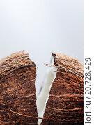Расколотый кокос. Стоковое фото, фотограф Виктор Колдунов / Фотобанк Лори