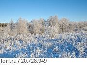 Купить «Зимний пейзаж с инеем в ясную погоду», фото № 20728949, снято 29 декабря 2014 г. (c) Елена Коромыслова / Фотобанк Лори