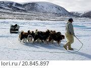 Купить «Inuit hunter walking his dog team on the sea ice. Dog teams must be rested every hour for 10 minutes.», фото № 20845897, снято 2 мая 2015 г. (c) age Fotostock / Фотобанк Лори