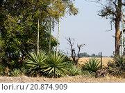 Купить «wild african landscape, Chobe national park», фото № 20874909, снято 23 марта 2019 г. (c) PantherMedia / Фотобанк Лори