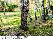 Купить «Schoeneberger Suedgelaende Nature Park», фото № 20886901, снято 22 мая 2019 г. (c) PantherMedia / Фотобанк Лори