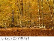 Купить «wood forest autumn fall bavaria», фото № 20910421, снято 19 декабря 2018 г. (c) PantherMedia / Фотобанк Лори